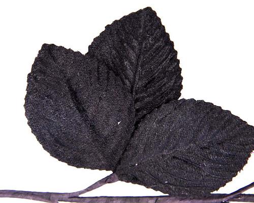 Craft & Millinery Supplies -- Trish Millinery- black velvet leaves closeup