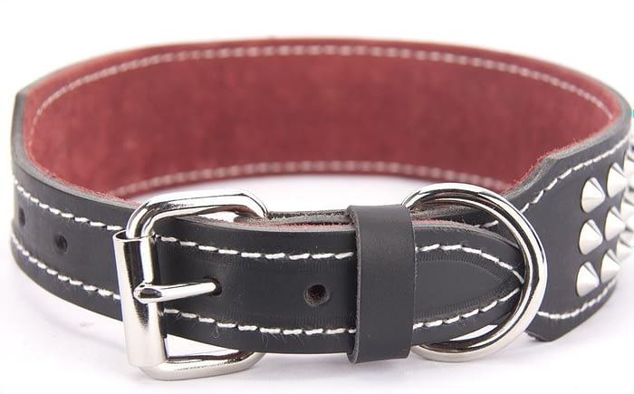 Belts From OZ - collar3 black1